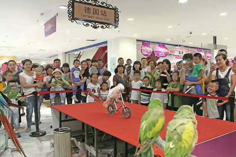 张家港市鹦鹉表演出租当地资源