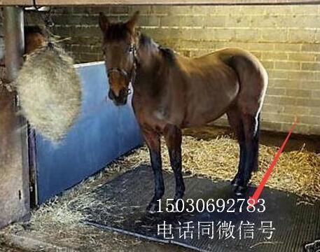 马棚垫 牛棚垫 猪棚垫 畜牧垫 马场垫 出口品质
