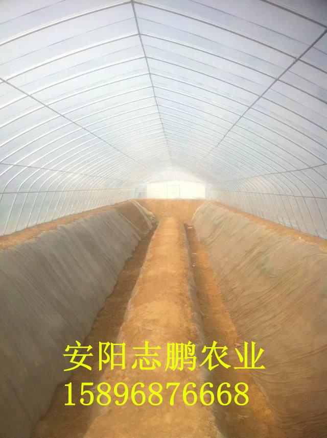 钢结构温室大棚一亩地需要多少钱