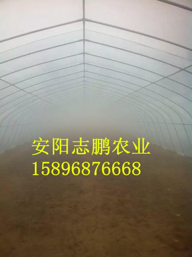 一亩地钢架蔬菜大棚造价多少钱