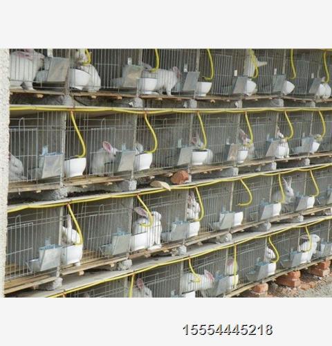 越西县 养兔一年的利润-鑫鑫种兔