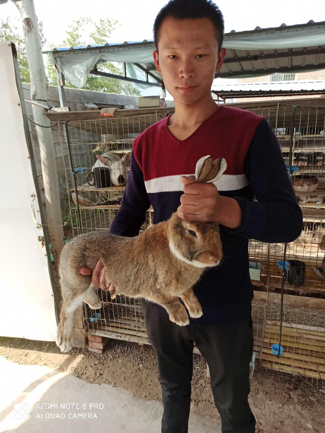 南京养殖种兔的利润