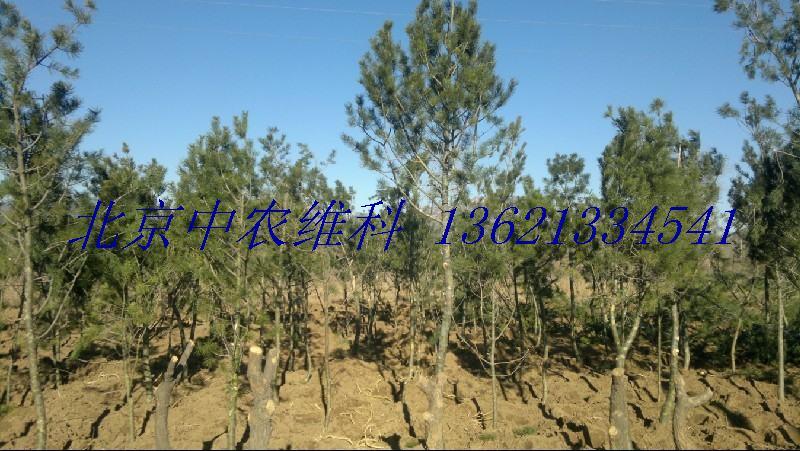 三,梨树品种有:七月酥,皇冠梨,红巴,黄梨  四,葡萄树品种有:峰