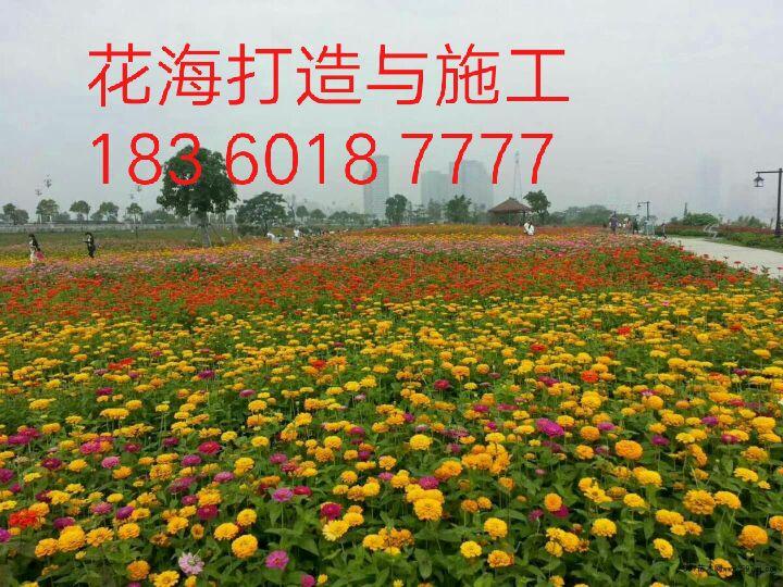 天津公路组合种子花海打造商秋播开始