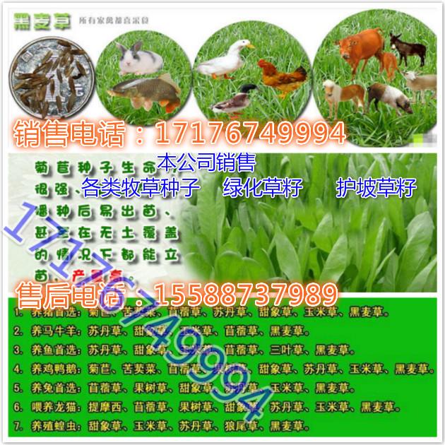 草籽牧草种子一般一年割几茬