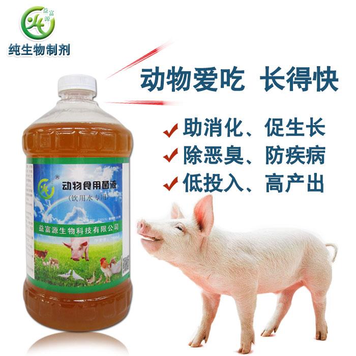 母猪孕期可以喂养益生菌发酵饲料吗多少合适