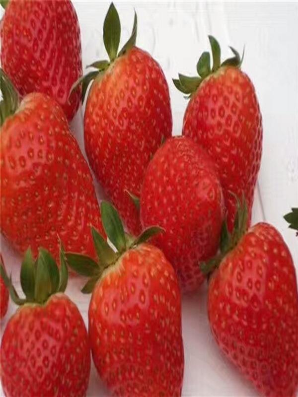 书香草莓苗湖北黄石到那里买