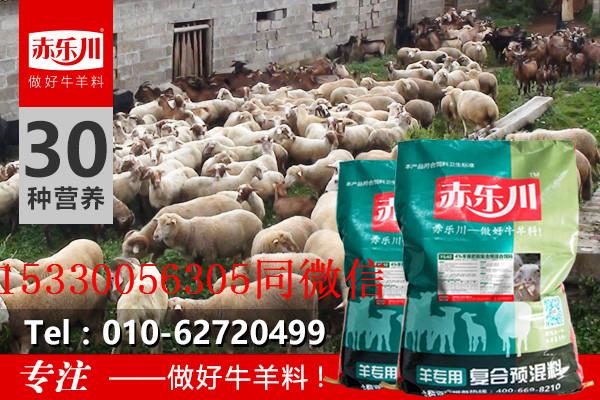 冬季圈�B育肥羊�料配方