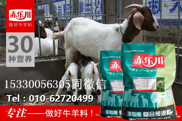 繁殖母羊专用营养饲料