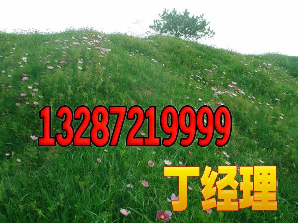 常州云南客土喷播草种护坡草种