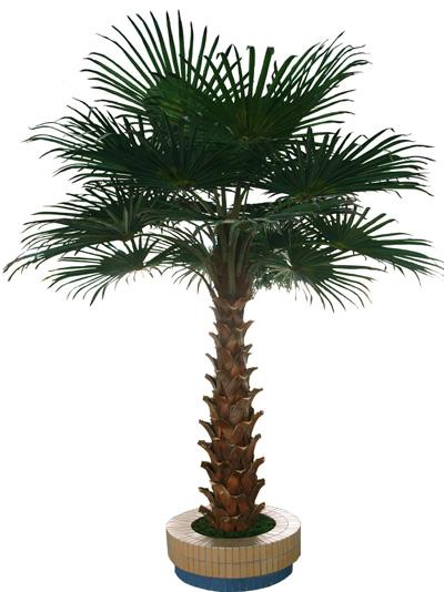 仿真棕榈树扇形叶片