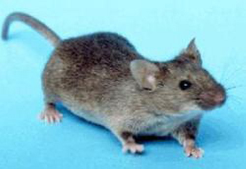广东灭鼠哪有卖 广东灭鼠价格 广东灭鼠批发市场 广东灭鼠生产企业 广东灭鼠厂家